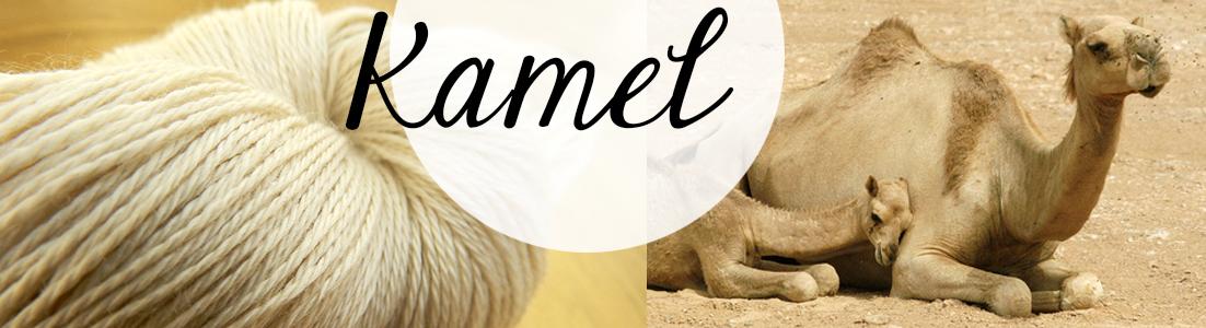 header-kamel